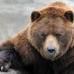 Как я встретил медведя...